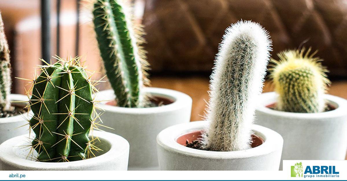 mejores plantas primer departamento cactus