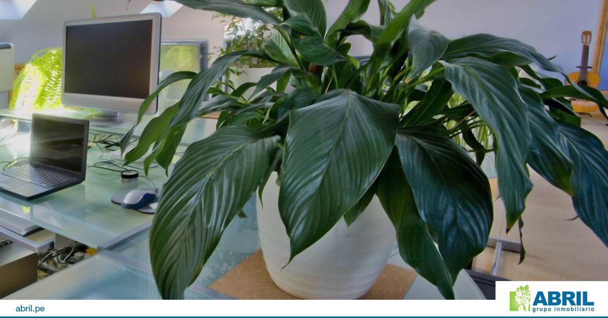 mejores plantas primer departamento pilistra