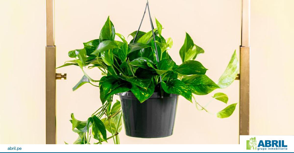 mejores plantas primer departamento potus