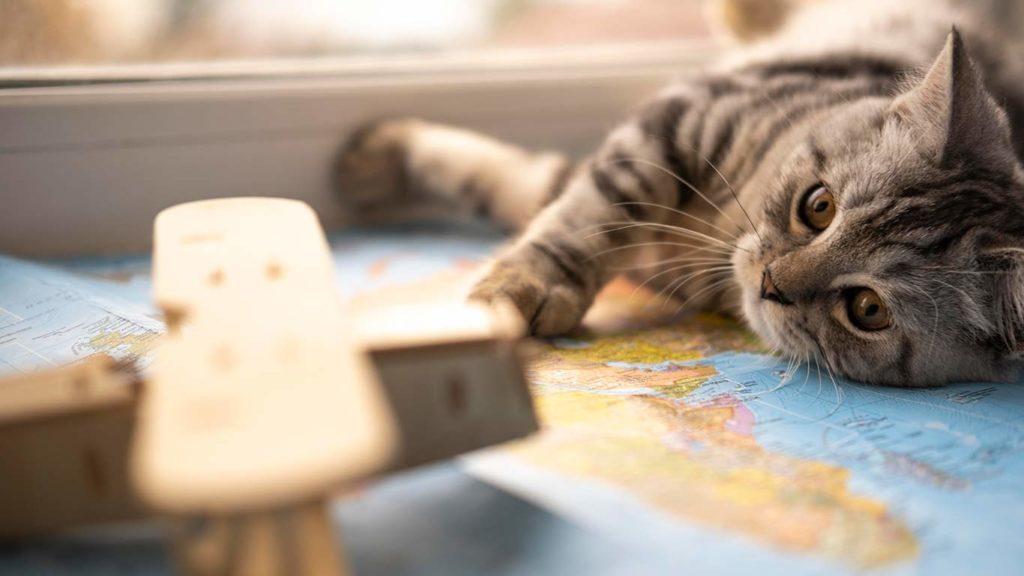 como-cuidar-a-tu-mascota-gato-juguete